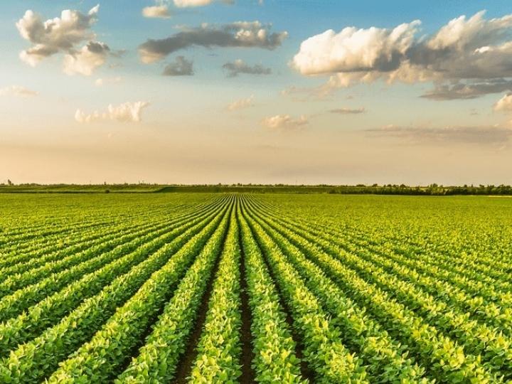 Área plantada com soja no Brasil é maior que a Itália
